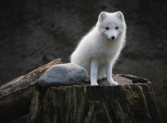 137869_25-most-beautiful-animals-photography-stumbleupon-8