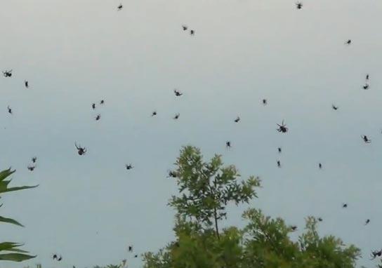 spider rain1