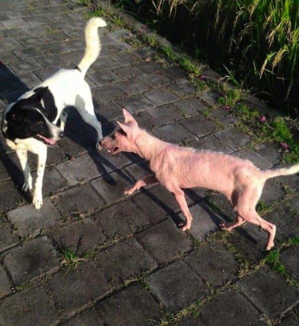 2xmhu-rescue-dogs-08