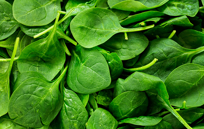 spinach-bacteria