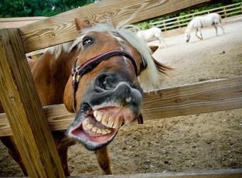 switzerland+horse+sex