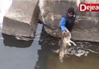 Vīrs izglāba slīkstošu suni, tomēr sirdis izkausēja suņa reakcija pēc izglābšanās