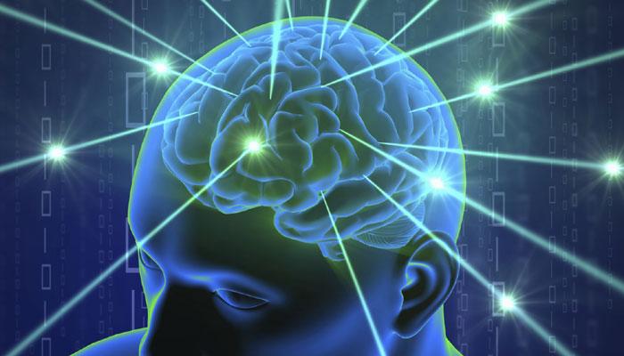 283874-brain