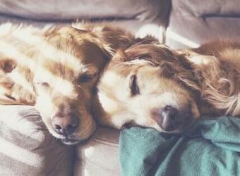 adorable-animals-beautiful-best-friends-Favim.com-2711331