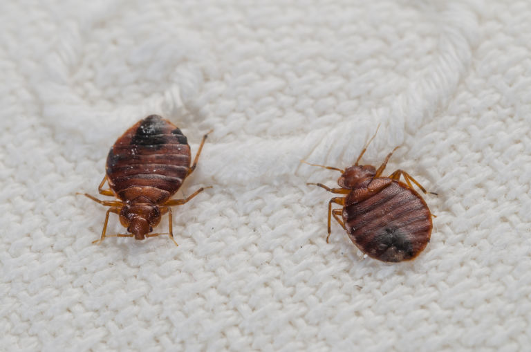 1461962580-syn-wdy-1461688245-syn-ghk-1461683127-bedbugs