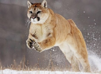 417569-animal-lovers-running-in-the-snow