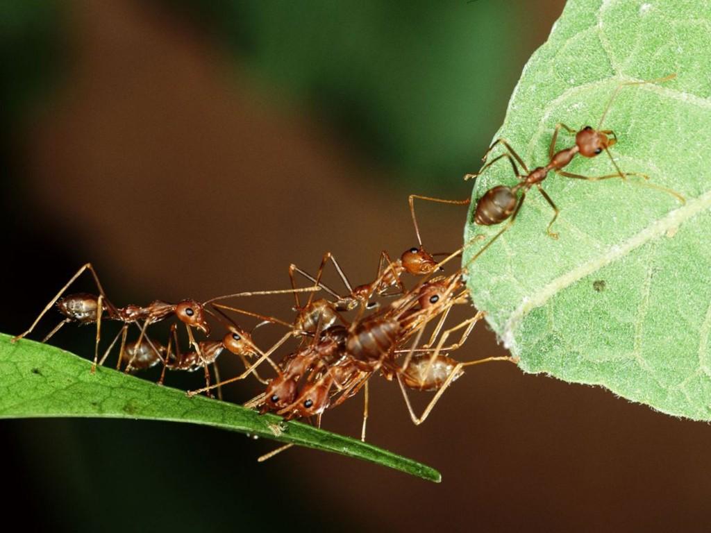 ants-v4