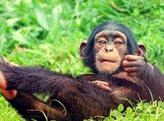 Resting-Baby-Monkey-Image