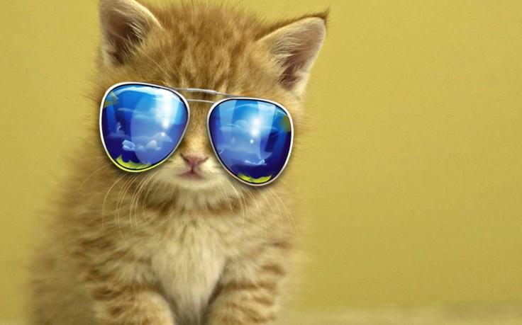 Animal Images Hd Cute Animals Displar Animal Wallpapers: 29. Jūlija Dienas Horoskops – Neslēpies!
