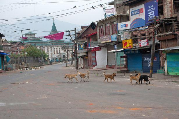 Stray-Dogs-India (1)