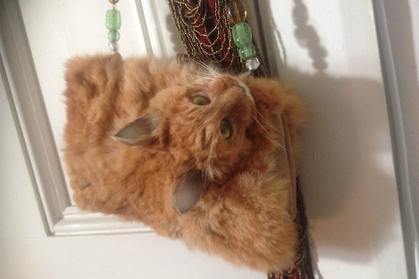 A handbag out of an actual dead cat and we just can't credit: trademe.co.nz http://www.trademe.co.nz/clothing-fashion/women/bags-handbags/handbags/auction-1160421420.htm
