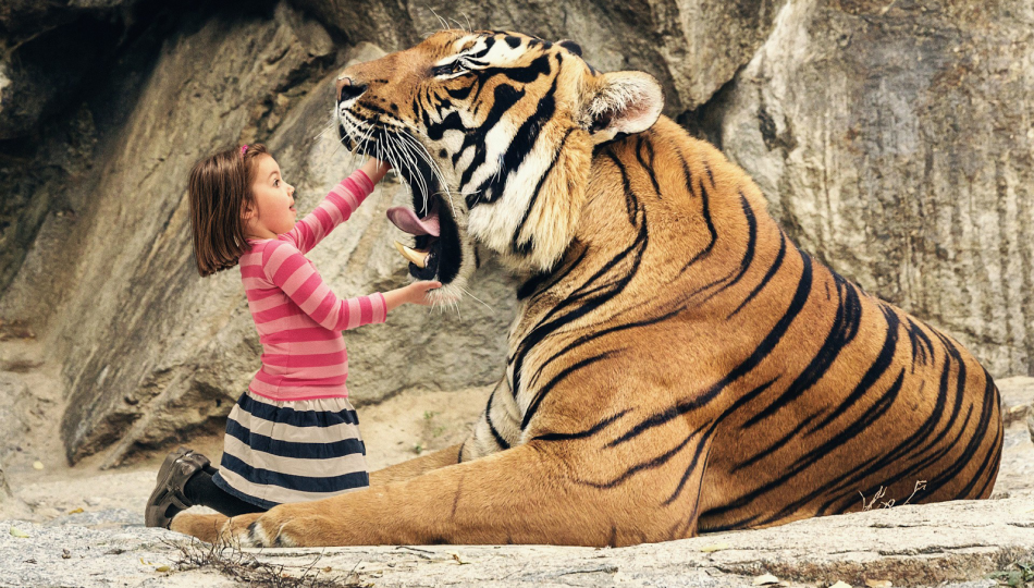 funny-big-tiger-dental-check-up-by-little-girl-hd-animals-wallpaper11-950x540