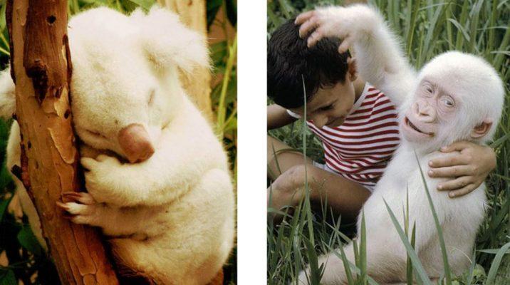 Vai esi redzējis kā izskatās dažādi dzīvnieki-albīni? Ja esi dzīvniekmīlis, tad tev šis jāredz! (FOTO)