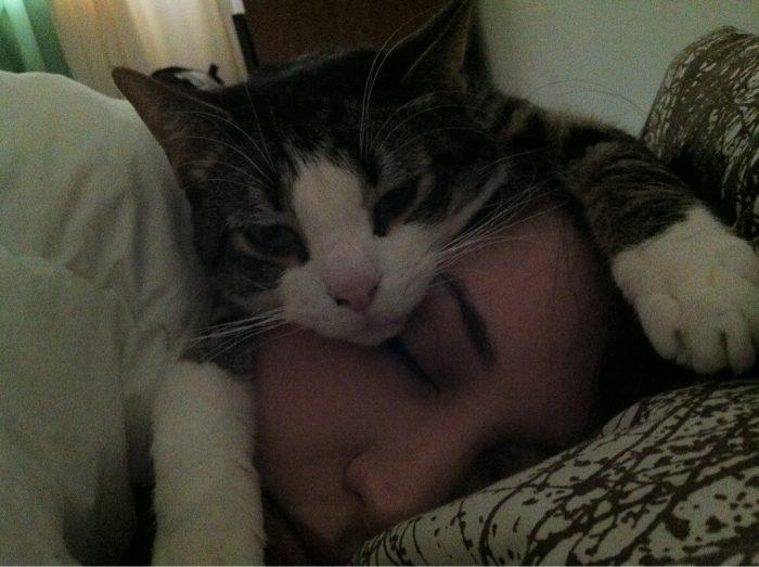 Vai esi ievērojis, ka kaķim patīk atrasties tuvu tavai galvai vai tavam spilvenam? Lūk, kāpēc viņi tā dara!
