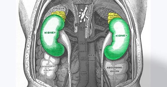 nieru veselība