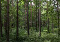 Atbalsta Rīgas un ārpus pilsētas teritorijas mežu apsaimniekošanas plāna projektus turpmākajiem deviņiem gadiem