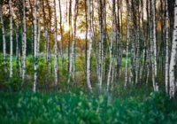 Šiem 14 augiem, no kuriem teju visi plaši sastopami arī Latvijā,  piemīt spēcīgas maģiskas spējas