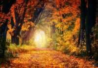 Trīs zodiaka zīmes, kurām rudens būs īpaši labvēlīgs un radošs laiks