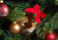 """Tagad tu vari nopirkt """"Ziemassvētku pus-eglītes"""", kas pasargās tavas dekorācijas no kaķiem"""