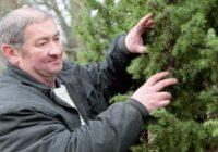 Kādu labumu sniedz katrs koks: kurus kokus labāk stādīt pie mājas, kuriem labāk palikt mežā; Dziednieka apkopota informācija