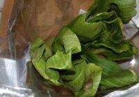 Brits panikā par dzīvību, uzkožot Lidl pirktajos kāpostos bīstamu molusku