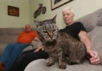 Lūk cik gadu ir pasaulē vecākajam kaķim, kurš nesen svinēja savu dzimšanas dienu
