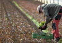 Saimnieki Latvijā izmisīgi meklē strādniekus un sola līdz pat 1000 eiro mēnesī, tomēr ne viss ir tik balts kā liekas