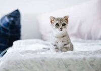 Jūs gultā laižat kaķi? Iesakām izlasīt šo rakstu un uzzināt ko tādu, ko iepriekš nezinājāt